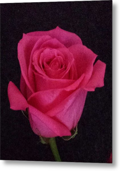 Deep Pink Rose On Black Metal Print