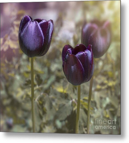 Deep Purple Metal Print