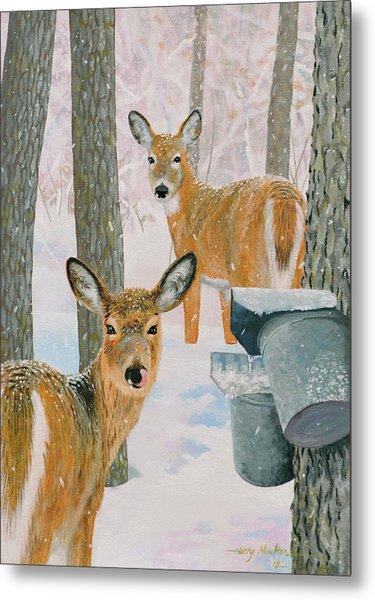 Deer And Sap Buckets Metal Print