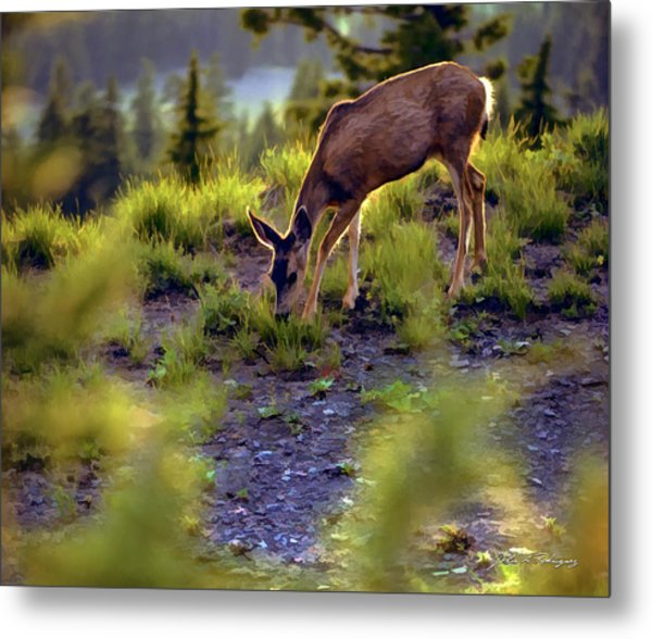 Deer At Crater Lake, Oregon Metal Print
