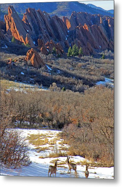 Deer At Roxborough Metal Print