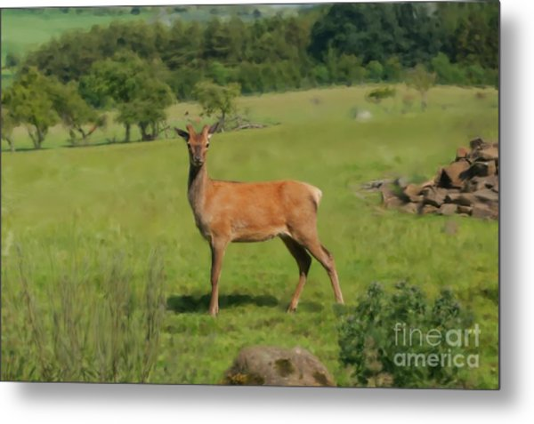 Deer Calf. Metal Print