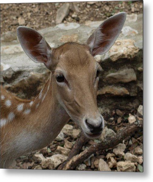 Deer Metal Print by Dennis Stein