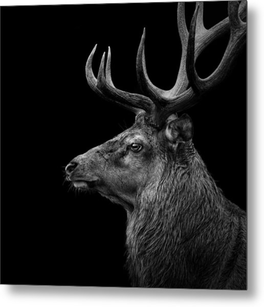 Deer In Black And White Metal Print