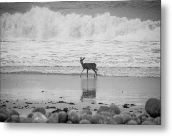 Deer In Ocean Black And White Metal Print