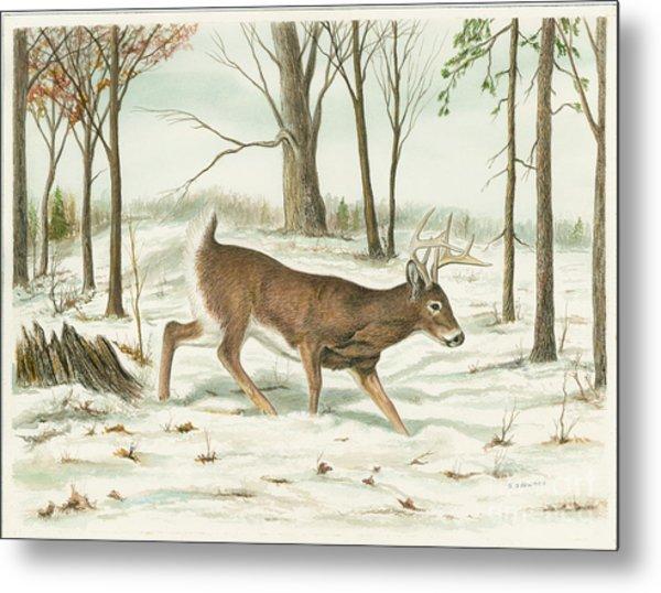 Deer In Snow Metal Print by Samuel Showman