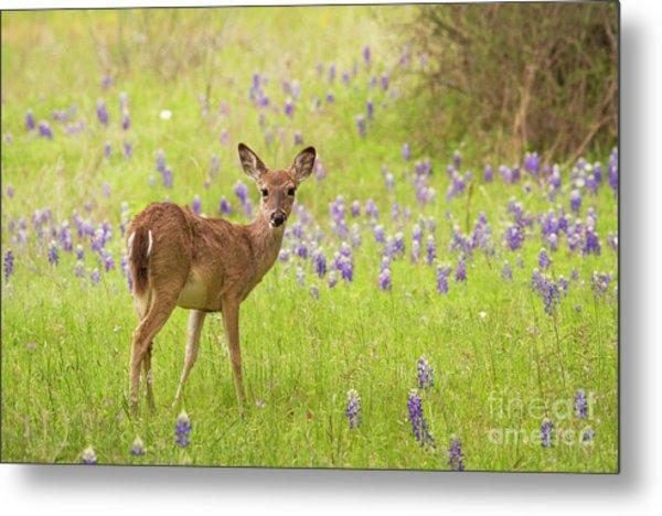 Deer In The Bluebonnets Metal Print