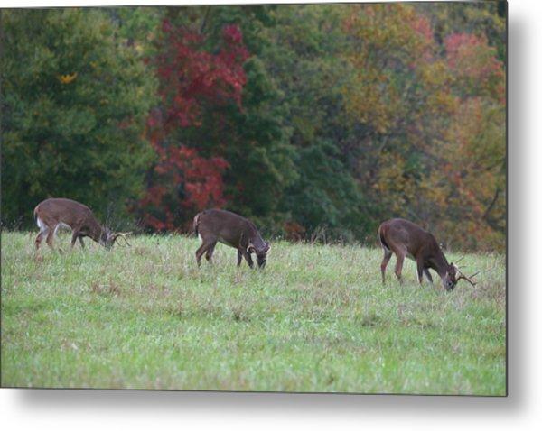 Deer In The Fall Metal Print by James Jones