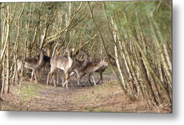 Deer Walking Across Forest Path Metal Print by Richard Griffin