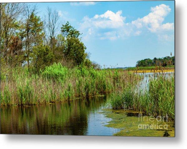 Delaware Wetlands Metal Print
