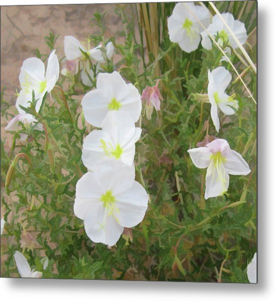 Delicate Desert Bloom - Death Valley Metal Print
