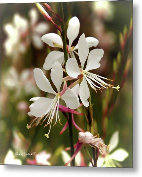 Delicate Gaura Flowers Metal Print