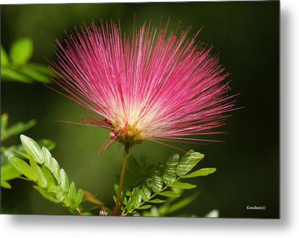 Delicate Pink Bloom Metal Print