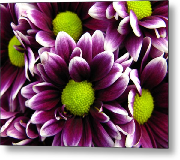 Delicate Purple Metal Print