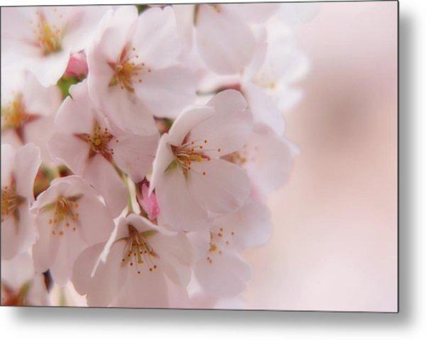Delicate Spring Blooms Metal Print