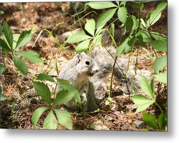 Delmarva Fox Squirrel - Local Rock Star Metal Print