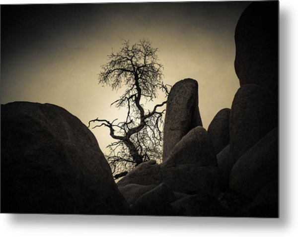 Desert Bonsai Metal Print