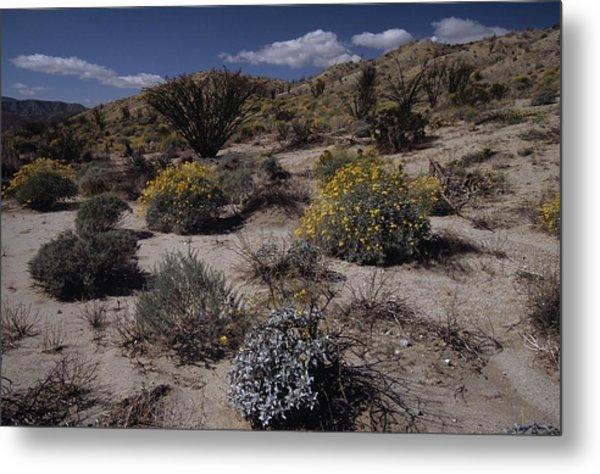 Desert Canyon Wildflower Bloom Metal Print