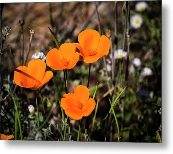 Metal Print featuring the photograph Desert Flowers Four Flowers Four by Penny Lisowski