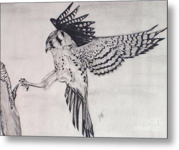 Falcon I Metal Print