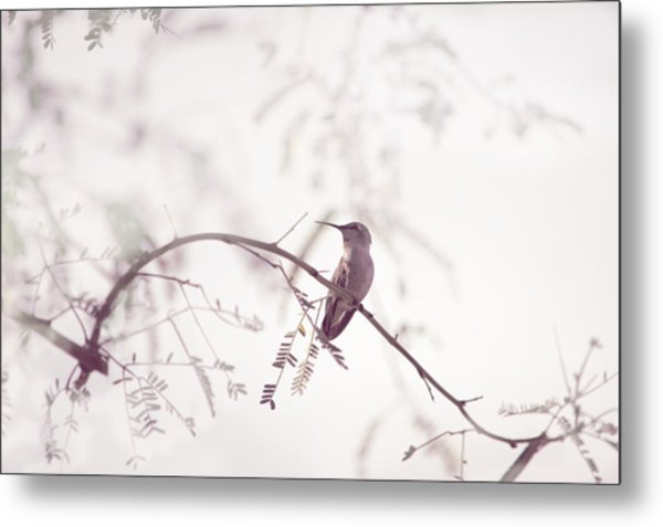 Desert Hummingbird II Metal Print