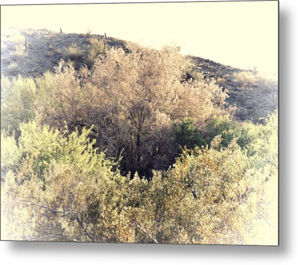 Desert Ironwood Afternoon Metal Print