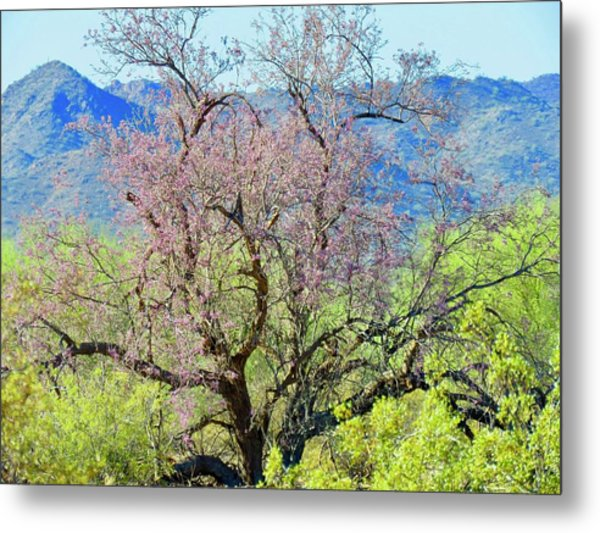 Desert Ironwood Beauty Metal Print