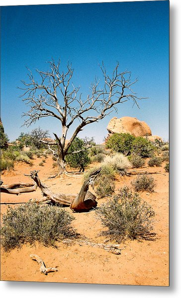 Desert Life Metal Print by Michael  Cryer