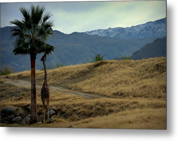 Desert Palm Giraffe 001 Metal Print