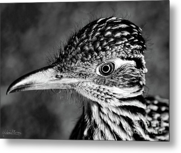 Desert Predator, Black And White Metal Print