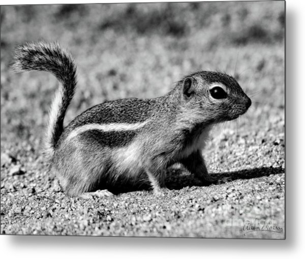 Scavenger, Black And White Metal Print