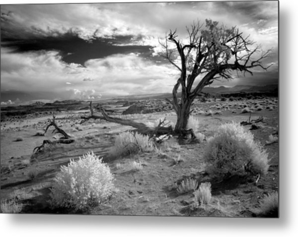 Desert Tree Metal Print