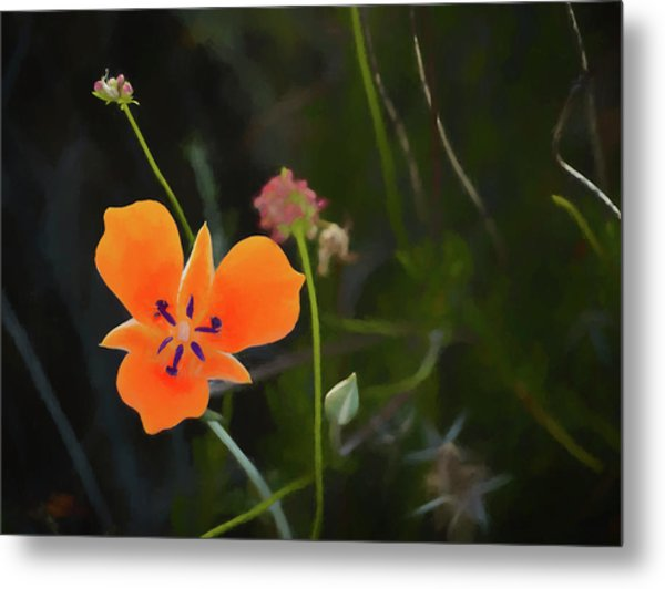 Metal Print featuring the photograph Desert Wildflower 2 by Penny Lisowski