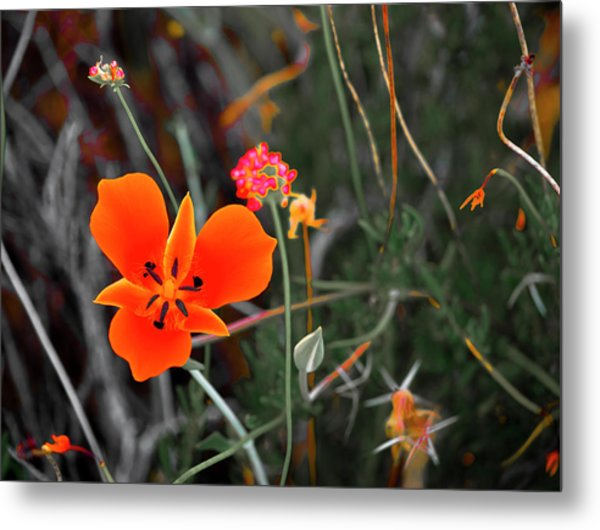 Metal Print featuring the photograph Desert Wildflowers by Penny Lisowski
