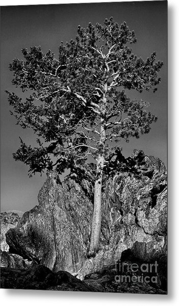 Determined, Monochrome Metal Print