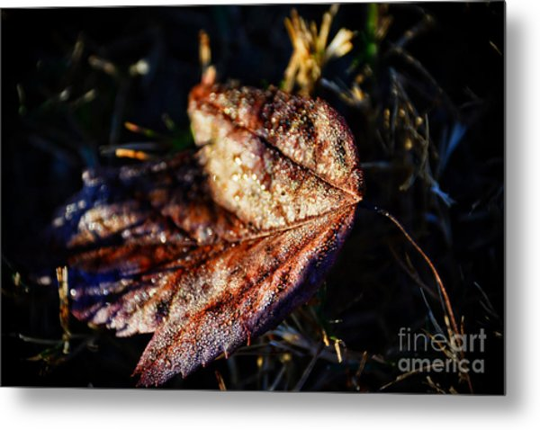 Dew Drops Sparkling And Showing Life On A Leaf -georgia Metal Print