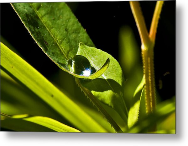 Dewdrop On A Leaf Metal Print by Michael Whitaker