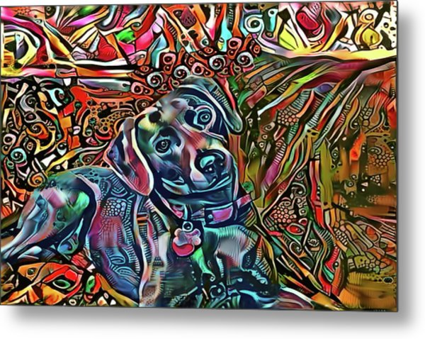 Did Somebody Say Treat? Blue Lacy Dog Metal Print