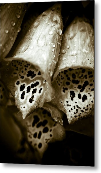 Digitalis Metal Print by Frank Tschakert