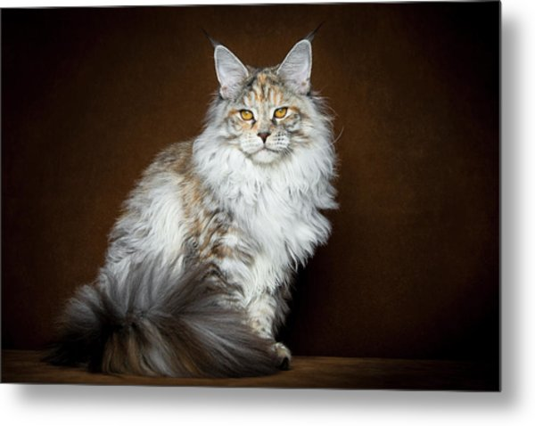 Dignified Lady Metal Print