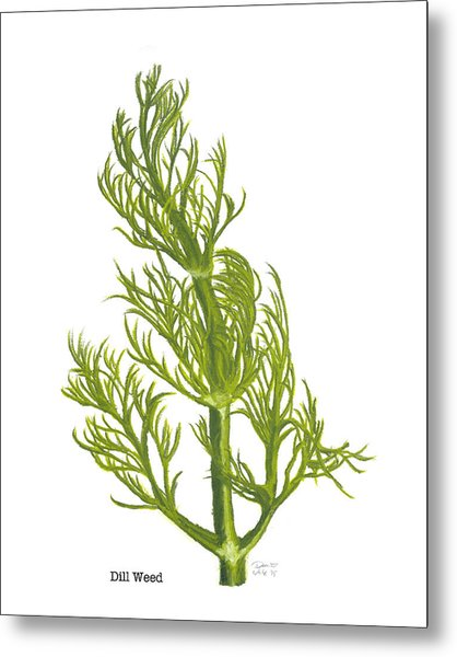 Dill Plant Metal Print