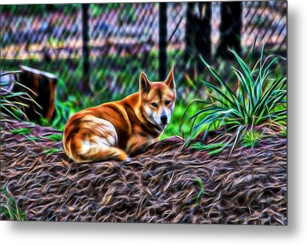 Dingo From Ozz Metal Print