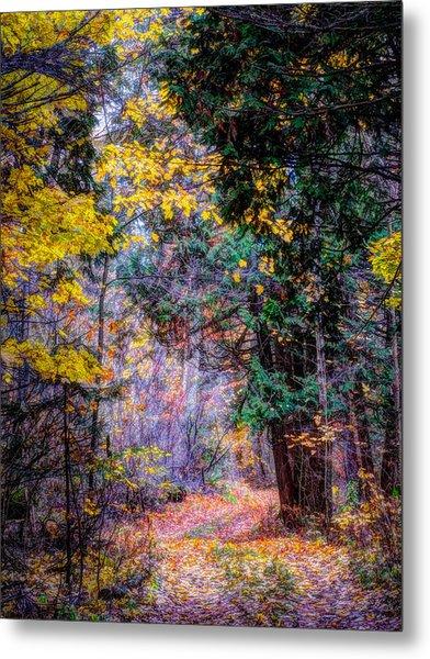 Distant Path Metal Print