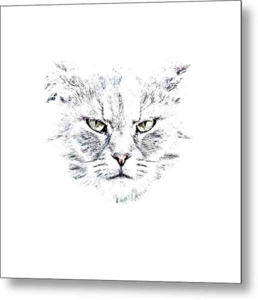 Disturbed Cat Metal Print