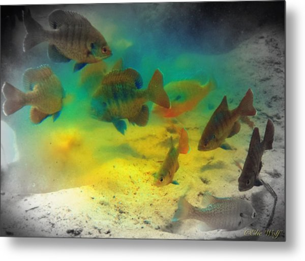 Dive Buddies Metal Print