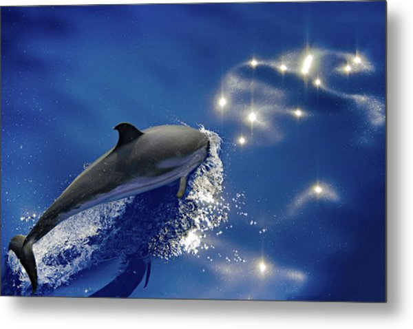 Dive Into The Blue Metal Print