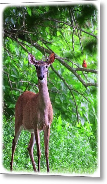 Doe And Cardinal Metal Print