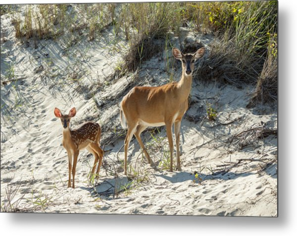Doe And Fawn Metal Print