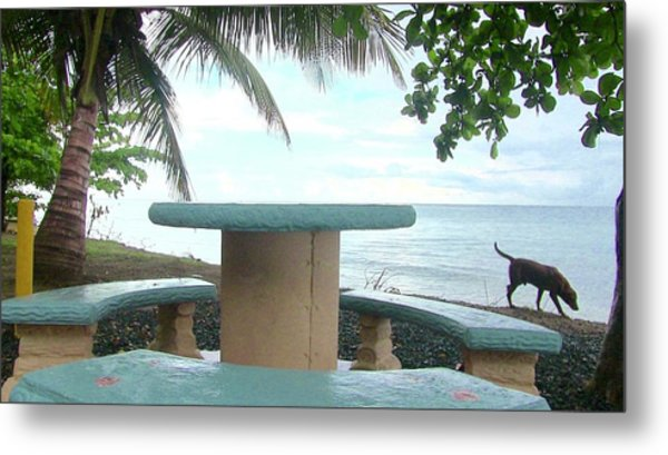 Dog By The Beach In Rincon Metal Print