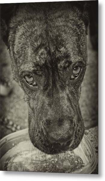 Dog Days Metal Print by Off The Beaten Path Photography - Andrew Alexander